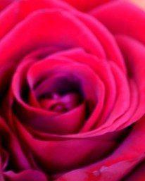 Red Garden Mix
